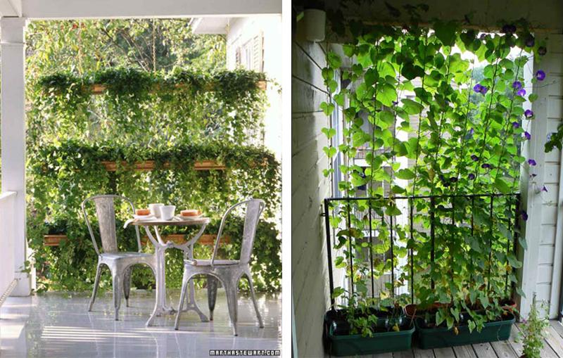 Planten Voor Balkon.Privacy Op Je Terras Of Balkon Kluswebsite